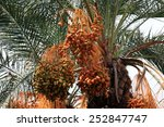 close up of colourful dates... | Shutterstock . vector #252847747