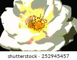 abstract blooming white rose ... | Shutterstock . vector #252945457