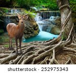 Sambar Deer Standing Beside...