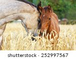 Portrait Of A Mare And Her Foa...