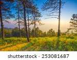 sunset  in a peaceful valley ... | Shutterstock . vector #253081687