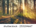 beautiful sunset in the woods ... | Shutterstock . vector #253104667