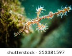 rare pipefish bunaken sulawesi... | Shutterstock . vector #253381597