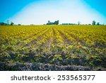 the cassava farm at the... | Shutterstock . vector #253565377