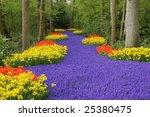 Flower Bed  Keukenhof  The...