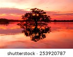 scenic view with a tree forming ... | Shutterstock . vector #253920787