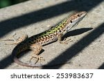 Green Lizard On Shadows Stripe...