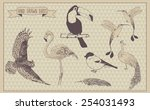birds vector set. hand drawn... | Shutterstock .eps vector #254031493