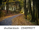 Road In Dark Forest During The...