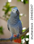 Small photo of African Grey (Gray) Parrot perched on tree branch