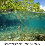 Mangrove Ecosystem Over And...
