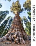 general sherman   the largest...