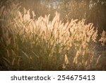 grass with evening light | Shutterstock . vector #254675413