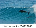 A Dolphin Leaps Through The...