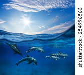 marine animals design template. ... | Shutterstock . vector #254996563