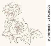vintage elegant vector card... | Shutterstock .eps vector #255035203
