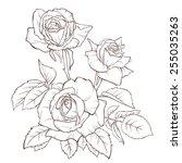 vector rose flower isolated on... | Shutterstock .eps vector #255035263