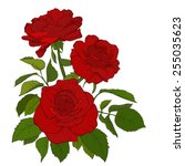 beautiful bouquet of roses... | Shutterstock .eps vector #255035623