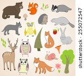 set of vector hand drawn forest ... | Shutterstock .eps vector #255072547