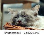 Stock photo cute kitten sadly looking 255229243