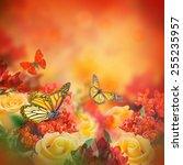 bouquet of yellow roses ... | Shutterstock . vector #255235957