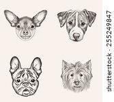 sketch bulldog terriers. hand... | Shutterstock . vector #255249847