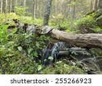 Small Stream In Natural Forest