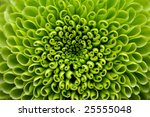 Green Flower Close Up  Abstrac...