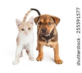 Stock photo a cute kitten and a puppy standing together on a white background 255591577