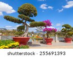 Bonsai Trees At City Flower...