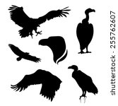 Vulture Set Of Silhouettes...