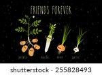 potato  onion  garlic  daikon...   Shutterstock .eps vector #255828493
