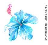 Single Exotic Blue Hibiscus...