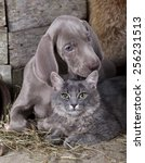 Stock photo puppy and kitten cat and dog 256231513