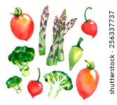 watercolor vector vegetables... | Shutterstock .eps vector #256337737