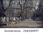 Pathway In The Cemetery  Dark...