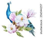Watercolor  Magnolia  Peacock ...