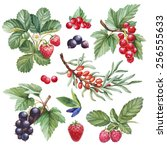 watercolor illustrations of... | Shutterstock . vector #256555633
