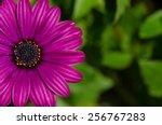 Close Up Of Beautiful Purple...
