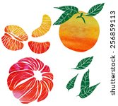 citrus   Shutterstock .eps vector #256859113
