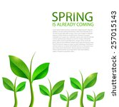 green sprouts background.... | Shutterstock .eps vector #257015143