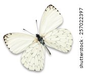 white butterfly isolated on... | Shutterstock . vector #257022397