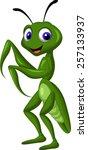 praying mantis grasshopper | Shutterstock .eps vector #257133937