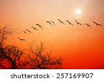 Birds Flying At Red Sunset....