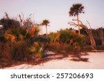 morning at the beach | Shutterstock . vector #257206693