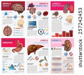 internal human organ health and ... | Shutterstock .eps vector #257242453