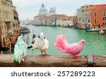 three colorful pigeons on... | Shutterstock . vector #257289223