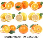 citrus collection | Shutterstock . vector #257352007