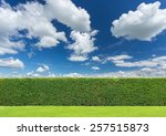 Hedge With Sky And Grass