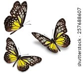 three yellow butterfly ... | Shutterstock . vector #257688607